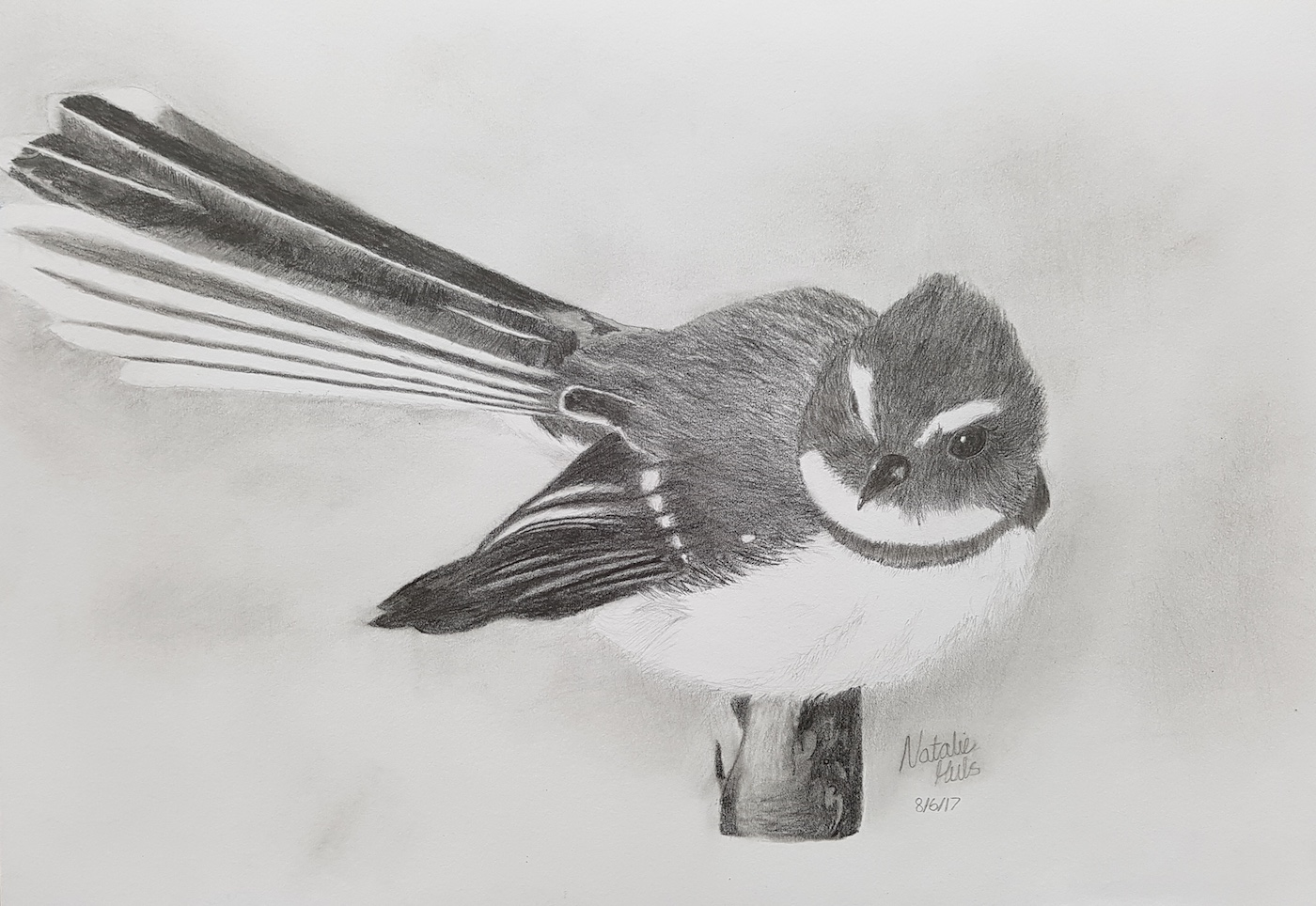 Fantail by Natalie aged 13